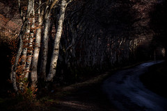 The Light at the End of the Tunnel (cotswoldman) Tags: conchra dornie lochlong scotland scottishhighlands scottish highlands highlandsandislands lochsandglens landscape colour trees tree lightandshadow gloucestercameraclub