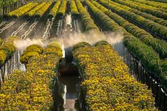 Nắng chiều (Lê Thanh Sơn) Tags: hoa