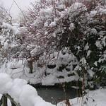 In my garden this morning thumbnail