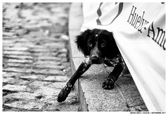 Perro (Matías Brëa) Tags: perro dog calle street blancoynegro blackandwhite byn bnw documentalismo documentary mono monochrome monocromo