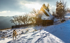 Wandering moments (Pan.Ioan) Tags: winter snow cold sunset sunlight dogs canine trees church remote nature outdoors countryside