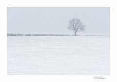 Lone Tree (George-Edwards) Tags: landscape tree snow snowy ice cold wind storm field farm land hedgerow cloud sky fog crop white blue branches outdoor countryside rural northwessexdowns westberkshire georgeedwards nature winter spring seasons minimal pang valley