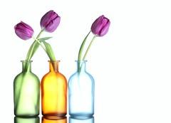Tulips (Karen_Chappell) Tags: flower floral flowers tulip tulips vase bottle glass white pink green blue orange stilllife pastel three 3