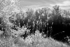 Fall at the Lake IR (Neal3K) Tags: ir infraredcamera kolarivisionblueirndvifilter henrycountyga georgia cubihatchaoutdooreducationcenter
