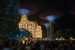 2018-12-Christmas-Wonderland_005 (laurenceputra) Tags: singapore christmaswonderland gardensbythebay lights night supertrees christmas wonderland