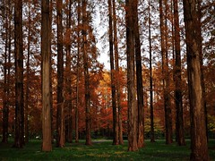 Deep forest (Kito K (fxkito2)) Tags: nature japan autumn tokyo color lumix olympus park red omd