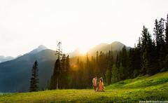 Lake Louise Indian Wedding (Dmitri Markine Wedding Photography) Tags: weddingphotographer albertawedding lakelouisewedding indianwedding weddinginspo bestweddingphotographer