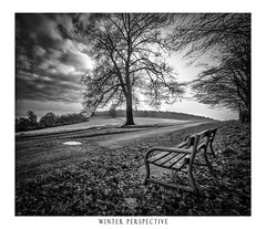 A Winter Perspective (Chris Lawrence Photos) Tags: perspective monochrome arundel park tree bench winter
