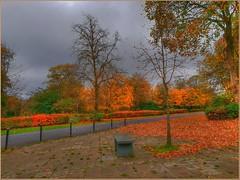Autumn in Springburn (Billy McDonald) Tags: hdr autumn springburn glasgow park springburnpark samsungs9