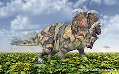 Dinosaur Albertaceratops (Michael Rosskothen) Tags: dinosaurier albertaceratops dino saurier reptilien ausgestorben paläontologie monströs natur pflanzenfresser hörner kraftvoll pflanzen gewaltig tier wildnis landschaft dinosaur paleontology saurian extinct herbivore horns powerful michaelrosskothen