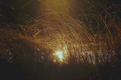 Mire sunset (Klas-Herman Lundgren) Tags: dalarna sweden gimmen autumn höst forest trees skog october red leaves colors ground skogsmark mire myr myrmark sunset sun light solnedgång sifferbo se