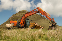 Working Girl... (Gisou68Fr) Tags: smileonsaturday sheep mouton ecosse scotland iledeskye skye isleofskye