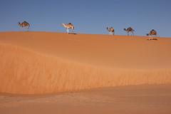 Top 5 (s_andreja) Tags: mauritania chinguetti dune sand camel caravan horizon