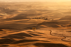 The Palouse (Mark McLeod 80) Tags: 2018 autumn markmcleod markmcleodphotography palouse washington fall landscape yellow sunset rural farm dust