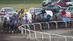 High River Chuckwagons 2016 (tallhuskymike) Tags: highriver chuckwagons worldprofessionalchuckwagonassociation wpca cowboy wagon alberta action 2016 race horse horses chucks outdoors event
