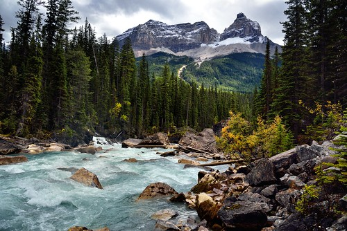 Looking Downstream with the Yoho River with Cathedral Crags and Other Peaks of the Bow Range (Yoho National Park)