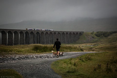 Just walking the dogs.. (Through_Urizen) Tags: architecture category england landscape northyorkshire places ribblesdaleviaduct yorkshire bridge viaduct battymossviaduct dale valley grass path dogs person walking walk mist rain greyskies fog hill canon70d canon1585mm canon outdoor travelphotography landscapephotography travel transport transportation train branchline