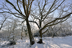 Winter wonderland  -  (Selected by GETTY IMAGES) (DESPITE STRAIGHT LINES) Tags: february season winter wintery snowscene snow snowfall nikon d7200 nikond7200 morning am nature mothernature naturalbeauty beauty tree trees wood woodlands forest leaves fallenleaves branch branches bark wet bexleyheath kent bexleyheathkent parkland parklife grass landscape nikon1024mm getty gettyimages gettyimagesesp despitestraightlinesatgettyimages paulwilliams paulwilliamsatgettyimages lesnesabbeywoods abbeywood abbeywoods nikon1024mmf3545geddx beastfromtheeast thebeastfromtheeast ilobsterit
