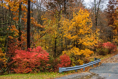 Westbrook Park_4593 (smack53) Tags: smack53 foliage fall fallseason fallcolors autumn autumnseason autumncolors colorful westmilford newjersey nikon d100 nikond100