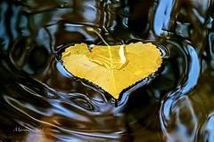 Naturaleza, otoño. (marianoabad1) Tags: otoño autumm mzuiko mzuiko300mmf4pro omdem1markii olympus fotografíadenaturaleza naturaleza water hojas agua nature naturephotography