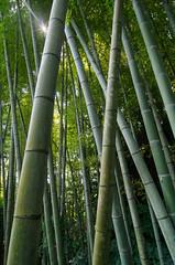 Bamboo Forest (beeldmark) Tags: natuur bos japan forest nature nihon nippon 日本 bamboo bamboe beeldmark pentax k5 smcpentaxda1224mmf4edalif 竹 竹林 obi kyushu zomervakantie
