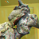 Top Fossils in NHM Rotterdam 3D thumbnail