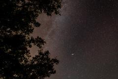 Starry night (..David..williams..) Tags: cano 5d mkiii stars night sky 2470f28l tree