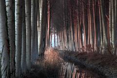 ||||||||||| (claudiomantova1) Tags: alberi pioppi tramonto sera luce ombre riflessi landscape colore color