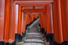 Fushimi Inari path (wileyimages.com) Tags: japan torri fushimi imari kyoto red path stairs