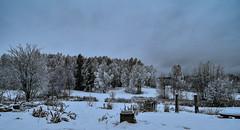 Nyårsafton i Danholn ❄️☃️🎉** Phone Edited ** (real.jtj) Tags: snow snö vinter winter sweden sverige dalarna falun danholn nature natur woods wood skog tree trees trä träd sundborn landscape
