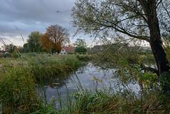Winkel (Julysha) Tags: d800e nikkor142428 acr autumn october 2012 river rainy winkel winkeldijk thenetherlands holland tree