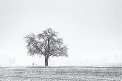 Walking in the Snow... (Ody on the mount) Tags: anlässe bäume em5ii felder fototour landschaft mzuiko4518 omd olympus pflanzen schnee winter bw fields landscape monochrome sw snow trees