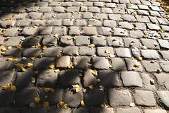 Cimetière du Père-Lachaise # 6 (just.Luc) Tags: cobbles pavés kasseien monochrome monochroom monotone herfst autumn fall herbst parijs parigi paris îledefrance france frankrijk frankreich francia frança