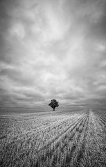 In a field of one (grbush) Tags: tree lonetree lonelytree solitude solitary lonely field rural countryside england northamptonshire bw blackwhite monochrome sonyilce7 tokinaatx116prodxaf1116mmf28 clouds dramaticsky