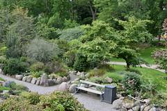 Bench From the Rockery (Bri_J) Tags: copenhagenbotanicalgarden botaniskhave universityofcopenhagen copenhagen denmark københavn danmark botanicalgardens nikon d7500 park bench path trees