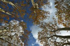 à Villeneuvette (Michel Seguret Thanks for 12,9 M views !!!) Tags: france herault languedoc occitanie michelseguret nikon d800 pro automne autumn fall herbst
