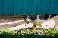 LI6K9981 (Бесплатный фотобанк) Tags: республика калмыкия элиста собака пес