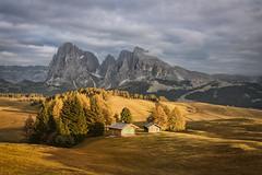 Dolomites 1 - Alpe de Siusi (Amy in Photoland) Tags: dolomites europe italy seiseralm trees mountain sky sunset landscape eveninglight alpedesiusi