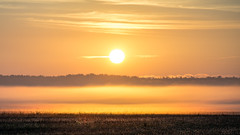 ile 2018-162 (Agirard) Tags: contax zeiss 135mm 28135 sony a7ii sunrise orleans island quebec canada morning fog brume mist sun landscape nature vintage lens