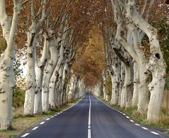 Ma route (Jolivillage) Tags: jolivillage route road strada hérault languedocroussillon languedoc occitanie france francia europe europa arbres trees alberi platanes planetrees automne autumn picturesque geotagged fabuleuse