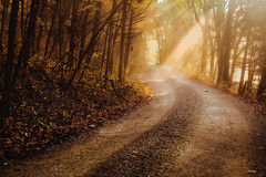 country lane (mnolen2) Tags: road sunlight gravel narrow trees morning atmospheric