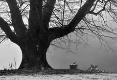 REACHING FOR THE FREEZING FOG (LitterART) Tags: monochrom monochrome schwarzweiss tree linde buam lime steiermark fog nebel nikond800 fx naturdenkmal