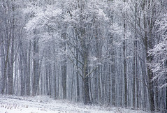 Almost Abstract (Matt Champlin) Tags: winterwonderland winter cold snow snowy forest woodland beautiful white canon 2018 life nature peaceful christmas holiday