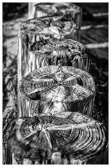 Hiddensee Island . (:: Blende 22 ::) Tags: blackwhite black white blackandwhite wood buhne wasser water beach bw monochrome einfarbig weis schwarz schwarzweis strasenszene strand hiddensee deutschland germany mecklenburgvorpommern insel island canoneos5dmarkiv ef70200mmf4lisusm