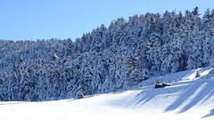 Κερνιτσα DSC07928 (omirou56) Tags: 169ratio snow sonydschx60v sky trees forest greece peloponnisos peloponisos peloponnese europe ελλαδα πελοποννησοσ χιονι δασοσ δεντρα ουρανοσ psp