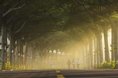 晨間漫步 (hosihane) Tags: 台灣 屏東縣潮州鎮 泗林 健走步道 晨光 斜射光 朝霧 人 步道 路 樹 行道樹 馬路 小葉欖仁 路燈 sony a77