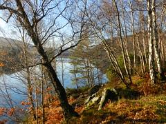 Autumn Colours, Dundreggan Reservoir, Near Invermoriston, Nov 2018 (allanmaciver) Tags: reservoir dundreggan invermoriston highlands scotland autumn colours trees water blue shades shadows bright november allanmaciver