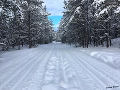 Piste de ski de fond. (donaldpoirier93@yahoo.fr) Tags: skidefond hiver extérieur sport sportdhiver neige enneigé ciel arbres randonnée ski froid appleiphonese