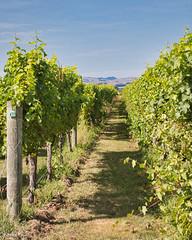190128 101025 (Vibeke Friis) Tags: martinborough wellingtonregion newzealand nz