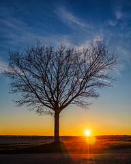 Spring Promise... (Ody on the mount) Tags: abendlicht anlässe bäume em5ii fototour gegenlicht landschaft mzuiko918 omd olympus pflanzen sonne sonnenstrahlen sonnenuntergang landscape sunset tree